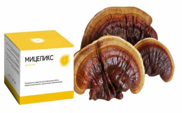 Мицеликс - грибной сбор в Северодонецке